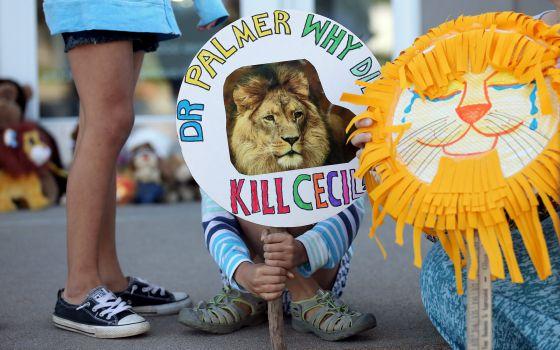 Criança protesta contra morte do leão Cecil em Minnesota, EUA, em frente à clínica do dentista Walter Palmer.