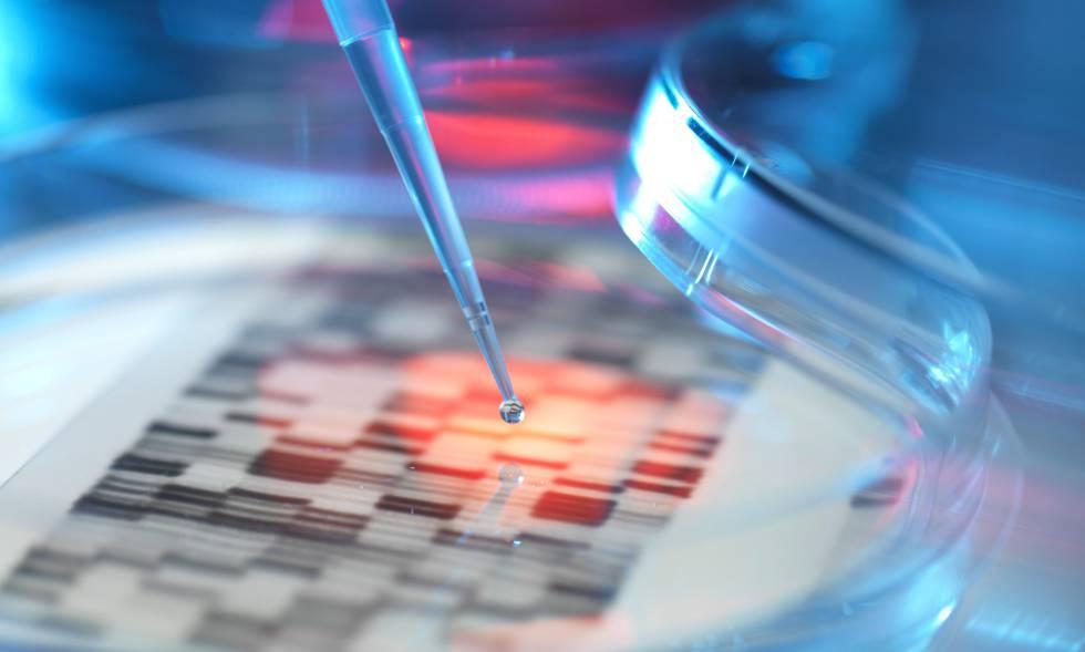 Testes de laboratório em placa de Petri.