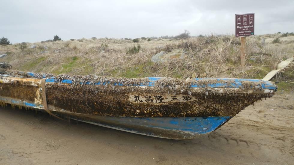 Barco japonês infestado de percebes encalhado em uma praia do Estado do Oregon