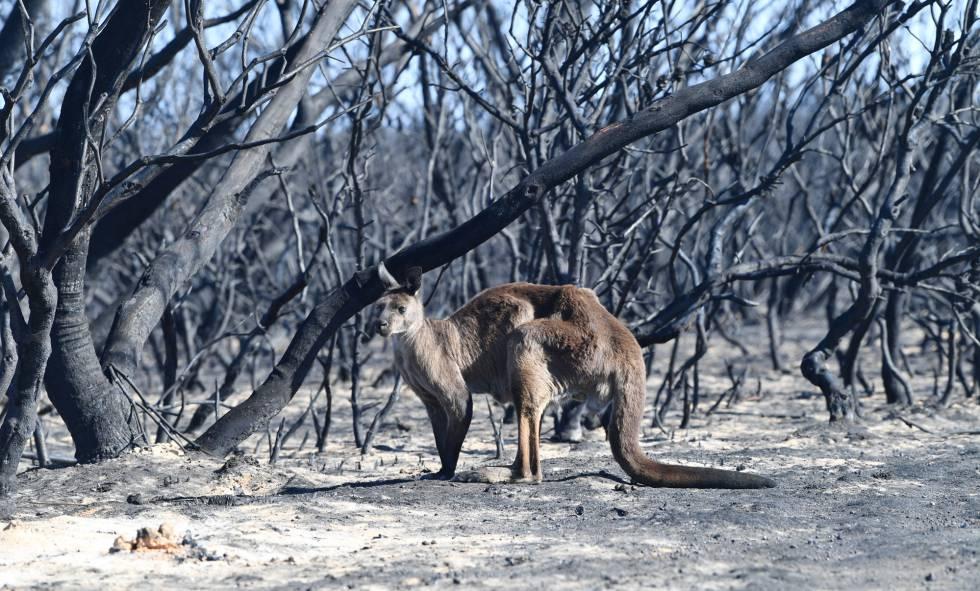 Paisagem devastada pelo fogo em Kangaroo Island, no sul da Austrália.