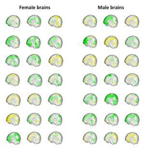 O volume das diferentes regiões cerebrais (em verde, maior; em amarelo, menor) de 42 pessoas mostra como os cérebros masculinos e femininos se sobrepõem.