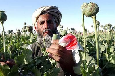 El opio envenena Afganistán | Internacional | EL PAÍS