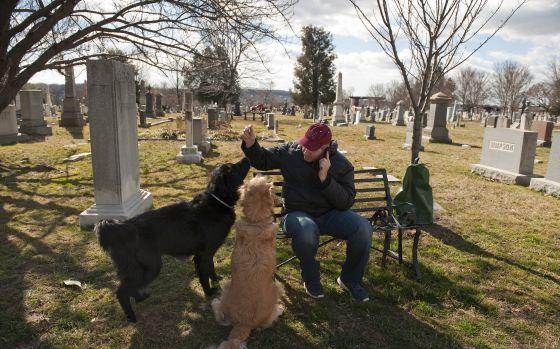 Um homem passeia com seus cachorros no Cemitério do Congresso.