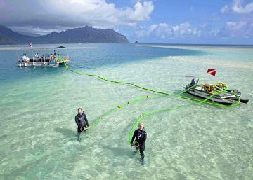 O peixe-papagaio, que se alimenta das algas dos recifes, é fundamental para diminuir a morte dos corais