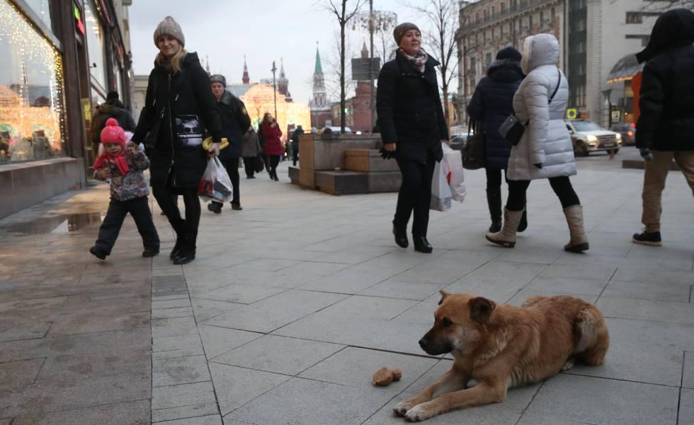 Um cachorro na rua Tverskaya de Moscou em dezembro passado.