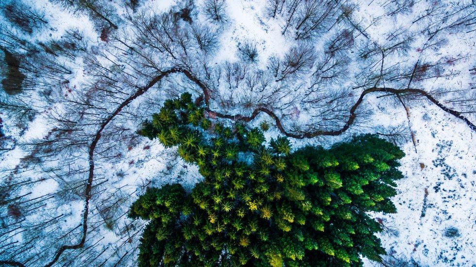 """O <a href=""""http://www.dronestagr.am/"""">Dronestagram</a> nasceu em 25 de julho de 2013 como a primeira rede social para fotografias e vídeos feitos com aviões não tripulados e, naquele momento, pretendia se tornar uma comunidade de referência para esse tipo de conteúdo. Na foto, a ganhadora do primeiro prêmio na categoria Natureza e Fauna do concurso do Dronestagram de 2016."""