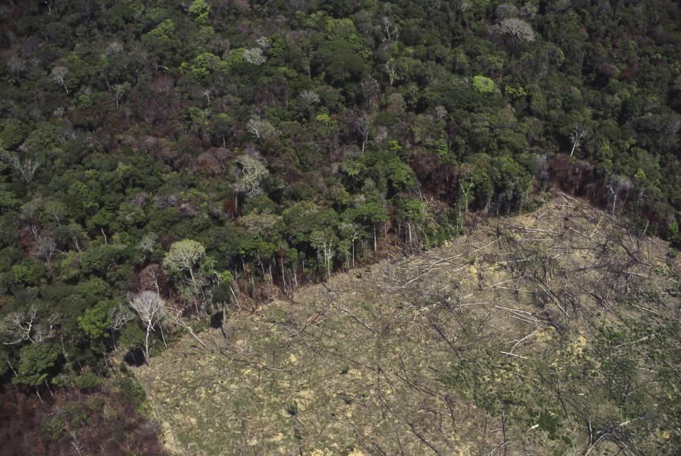 Área desmatada na floresta amazônica para agricultura.