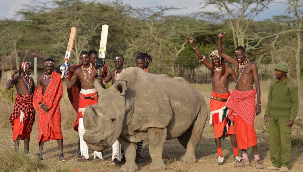 Fotografia de arquivo do último macho de rinoceronte branco do norte que restava junto ao povo massai, em junho do ano passado