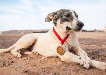 O animal conseguiu atingir o objetivo da Marathon des Sables