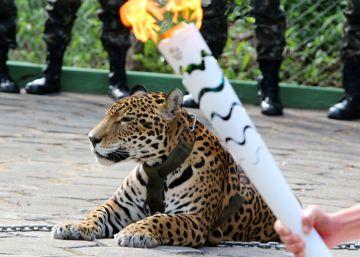 Pedido da entidade de Defesa dos Animais vai ao encontro de manifestações e decisões sobre fechamentos de zoológicos no mundo
