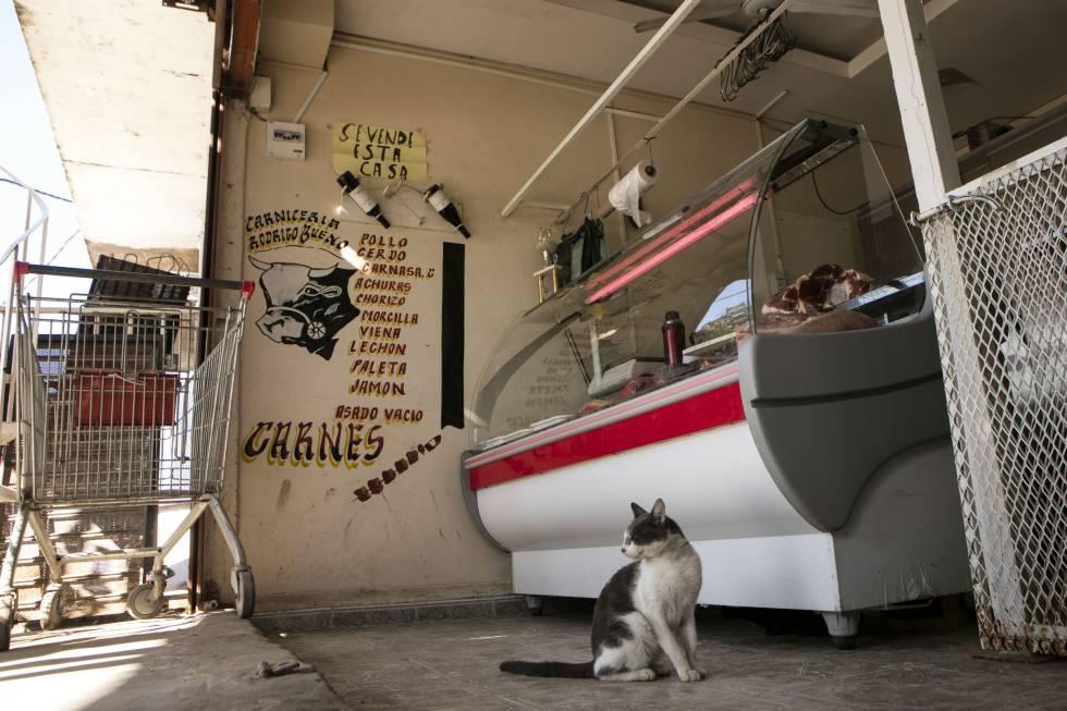 Um gato espera um pedaço de carne que lhe salve o dia.
