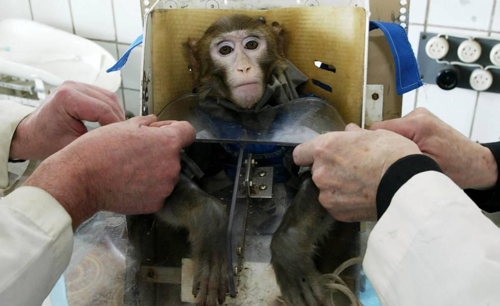 Teste médico com um macaco na Rússia em 2003.