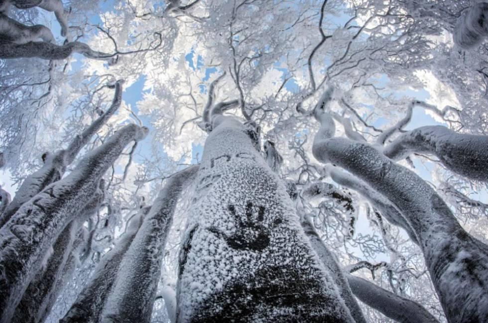 Bosque nevado nos montes Taunus (Alemanha).