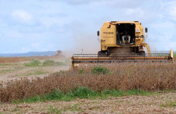 Máquina colhe alimentos exportados para China.