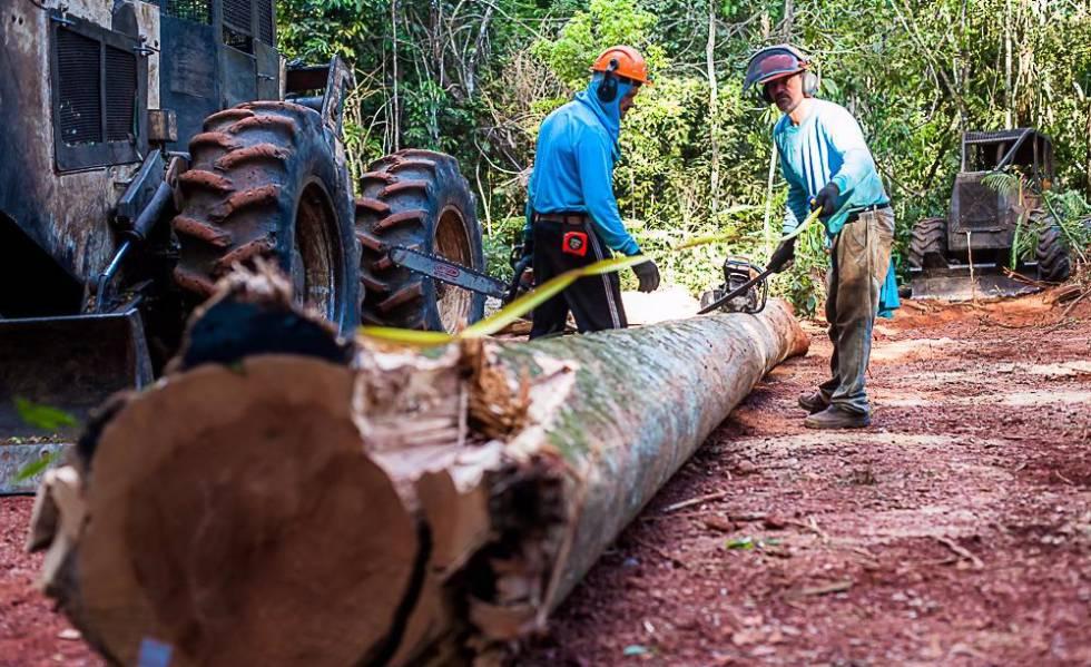 Funcionários em madeireira legal no Mato Grosso.