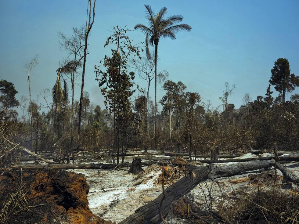 As marcas dos incêndios no município de Cláudia, no Estado de Mato Grosso.
