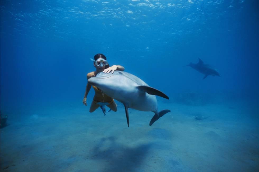 Uma mergulhadora nada junto a um golfinho no mar Vermelho.