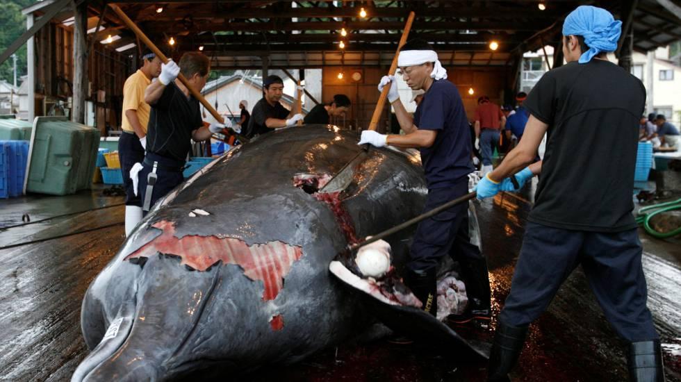 Vários trabalhadores destrincham baleia no porto de Minamiboso, a sudeste de Tóquio