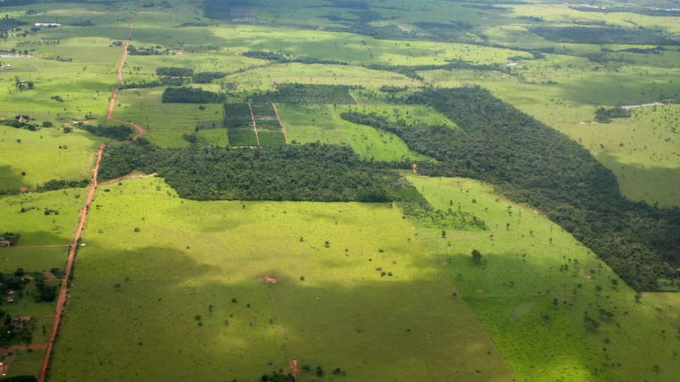 A Amazônia, por exemplo, tem cada vez mais descampados
