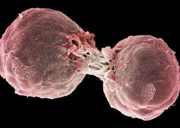 A imunoterapia já é uma realidade para alguns tumores. Em outros, já há avanços no sentido de substituir métodos mais agressivos, os quais, no entanto, ainda terão de conviver com os mais modernos durante anos