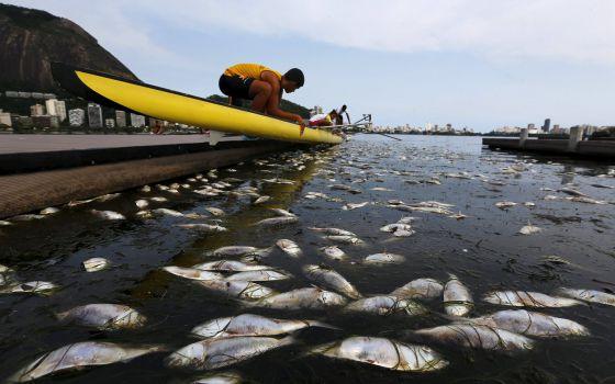 Peixes mortos na lagoa Rodrigo de Freitas, na última segunda-feira.