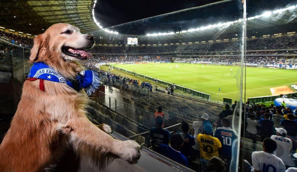 Cachorro acompanha partida entre Cruzeiro e São Paulo.