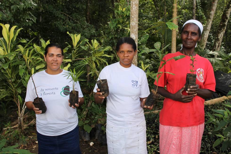 Mulheres trabalham na recuperação de bosques no interior de São Paulo.
