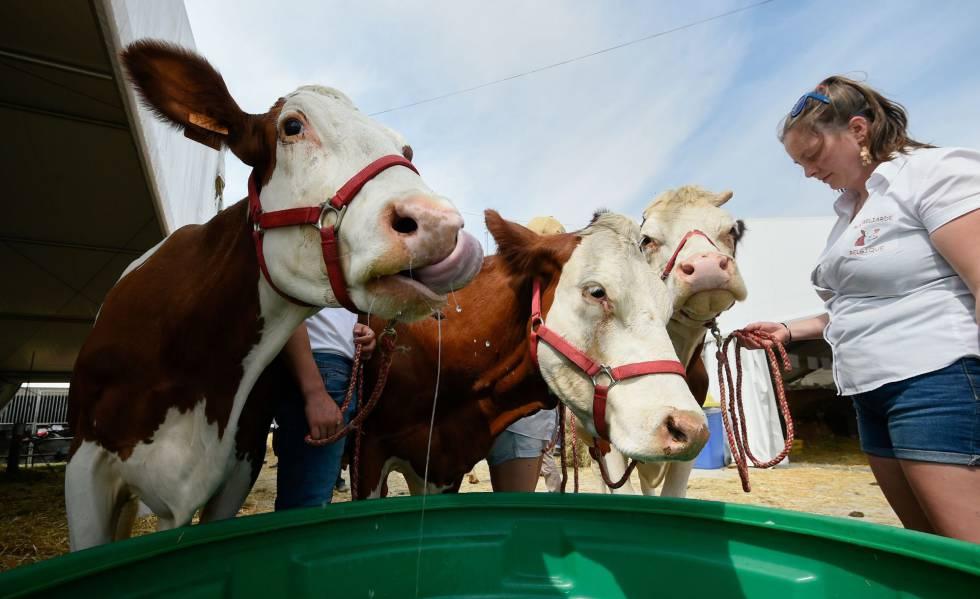 Feira agrícola em Libramont (Bélgica), um dos setores afetados pelo acordo com o Mercosul.