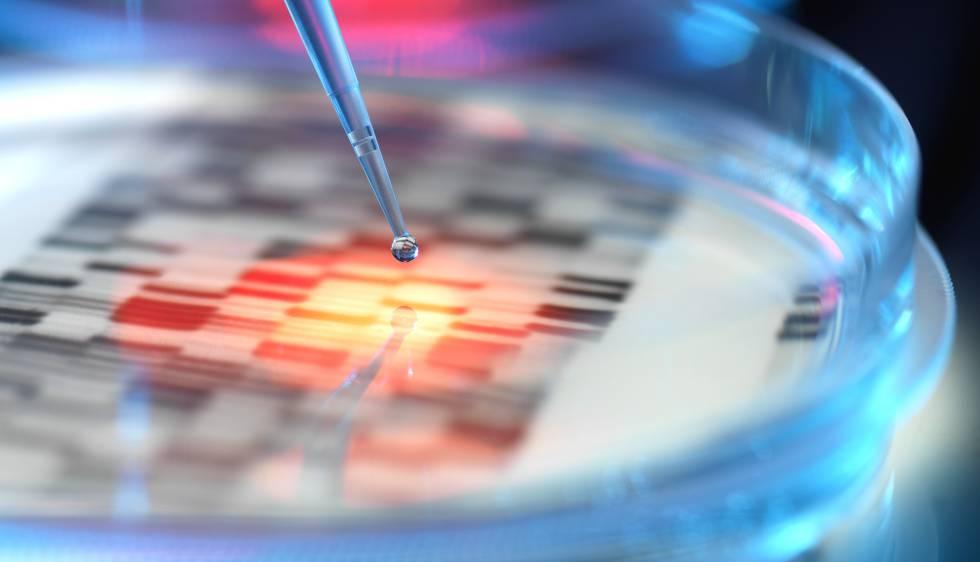 Placa de Petri em um laboratório