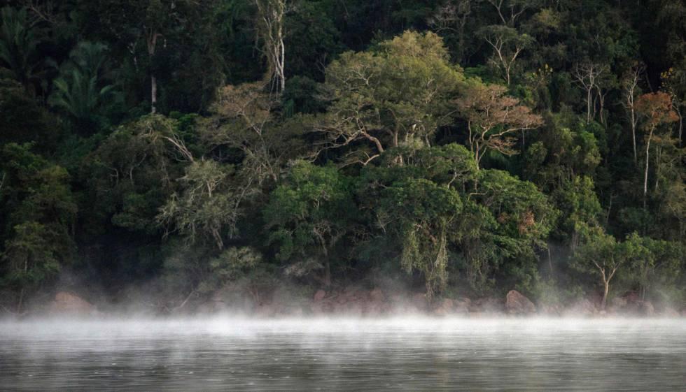 Imagem de um território da floresta amazônica no Pará.