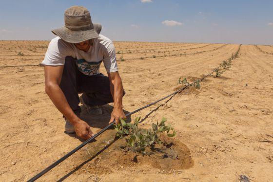 O sistema de irrigação por gotejamento criado pela empresa Netafim é uma das contribuições tecnológicas israelenses mais utilizadas em todo o mundo.