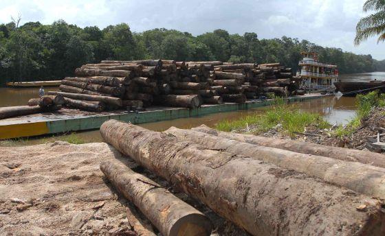 Desmatamento na Amazônia.