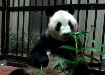 Funcionários do parque em Tóquio dizem que o urso, que nasceu há uma semana passa bem