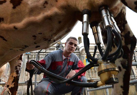 Um trabalhador ordenha uma vaca na França.