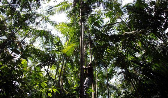 Imagem da Amazônia brasileira.