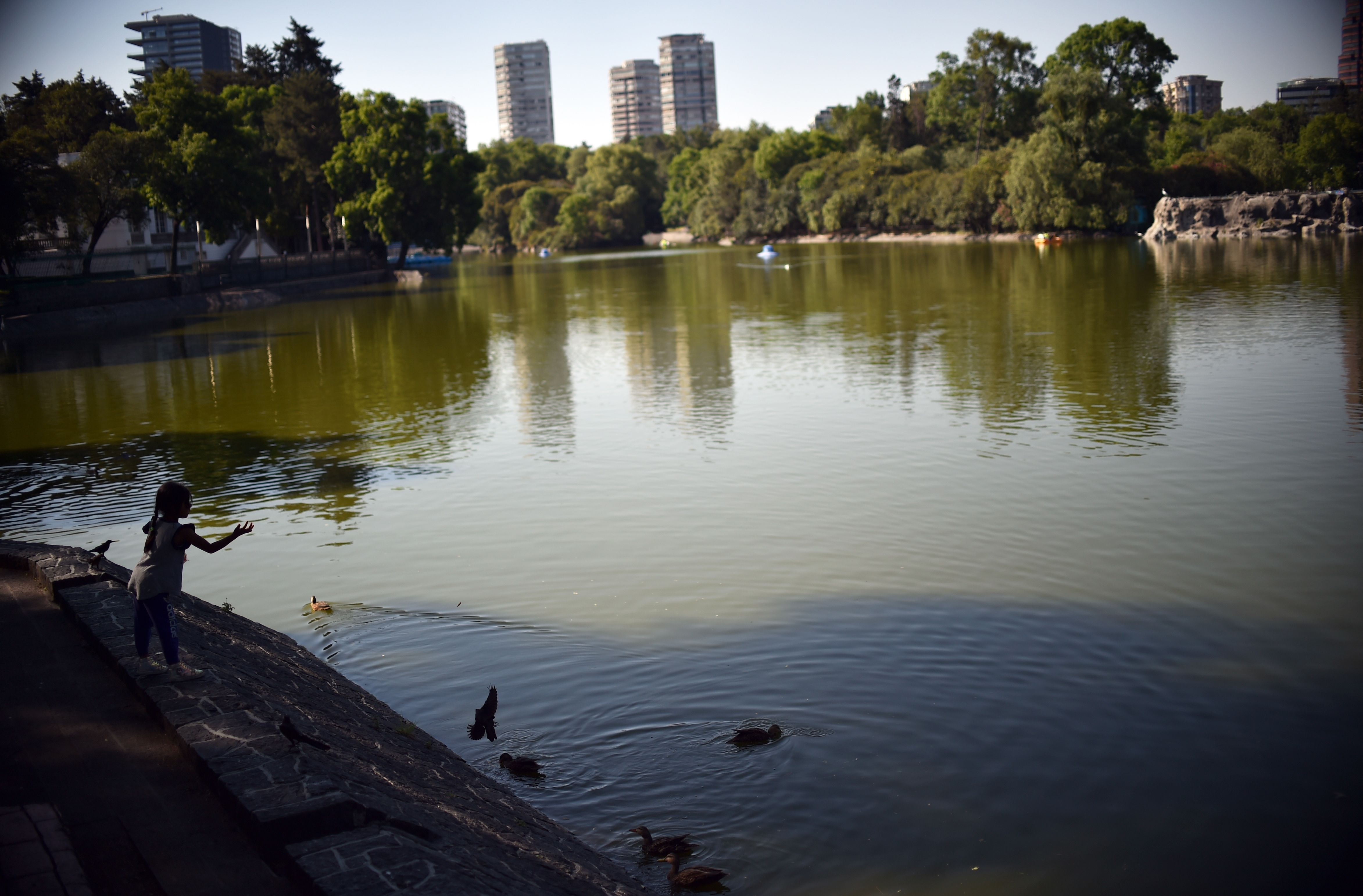 "A girl feeds the ducks at a lake of the Chapultepec Forest in Mexico City on March 24, 2020. - Mexico's  undersecretary of health prevention and promotion, Hugo Lopez-Gatell Ramirez, said the country was entering ""phase two"" of its coronavirus approach, moving from containment to ""mitigation."" The decision came after Mexico's confirmed cases rose to 367, five percent of which have come from domestic transmission. (Photo by RODRIGO ARANGUA / AFP)"