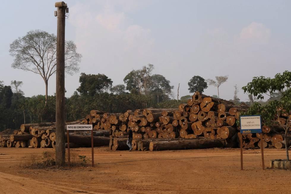 Uma pilha de troncos em uma empresa madeireira na Floresta Nacional de Jacundá, em Rondônia.