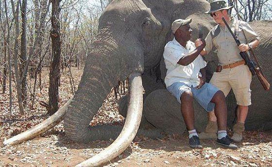 Cada presa do elefante pesava 55 quilos.