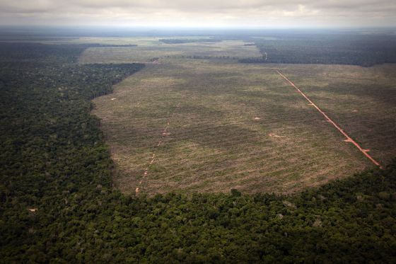 O ritmo de desmatamento da Amazônia brasileira voltou a subir em 2013.