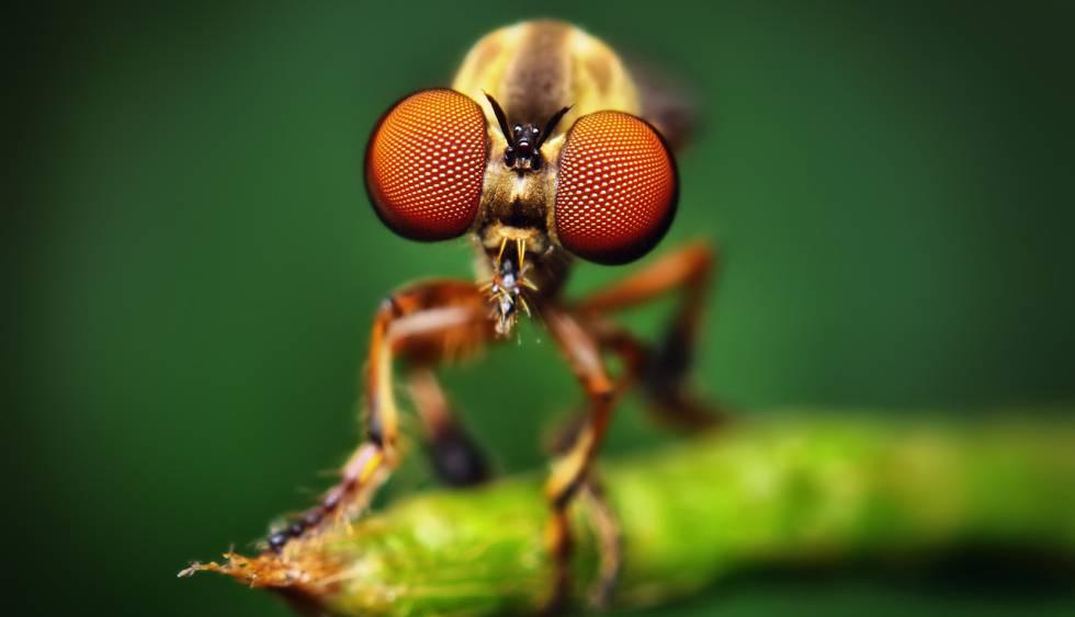 As moscas estão entre os principais polinizadores.