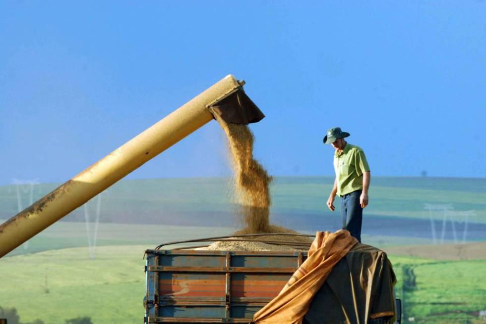 Trabalhador rural sobre um caminhão carregado de soja no Brasil.