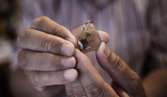 Um chaveiro com o inseto de Chagas transformado em souvenir.