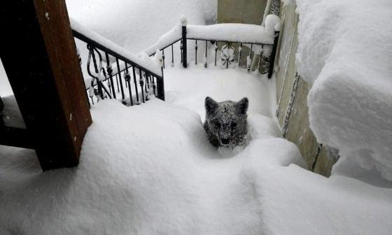 O ursinho encontrado nas escadas da casa.