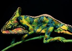 O artista italiano Johannes Stötter engana os olhos humanos com suas criações de  bodypainting