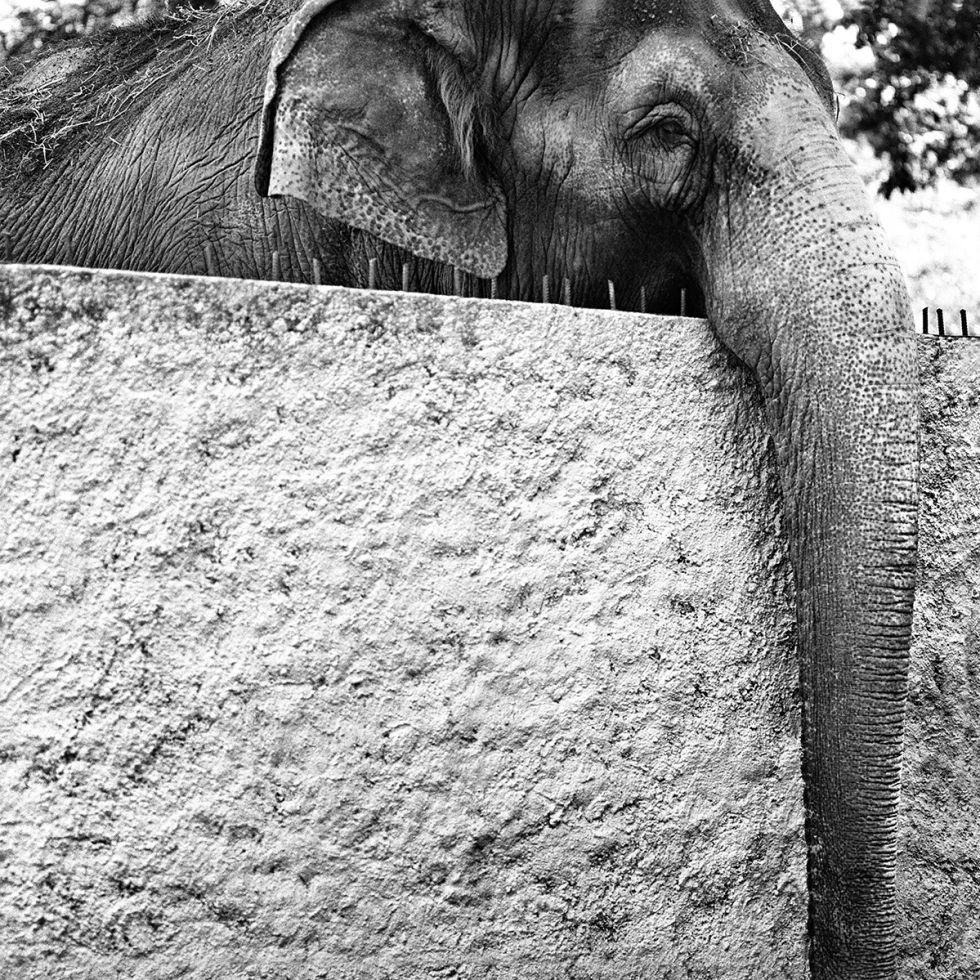 Elefante. 2003-2004.