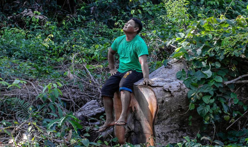O cacique Turu Arara observa sua terra devastada por madeireiros.