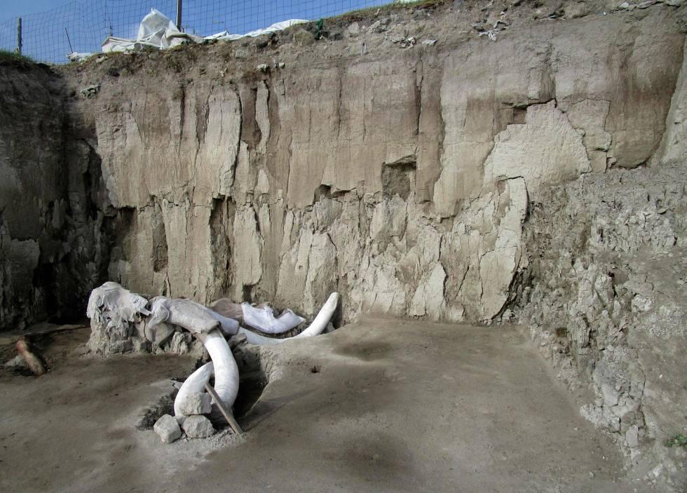Restos de ossos de um mamute em Tultepec, México.