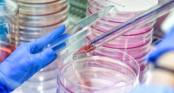 Testes no centro de Medicina Regenerativa de Barcelona, onde se trabalha com células-tronco.
